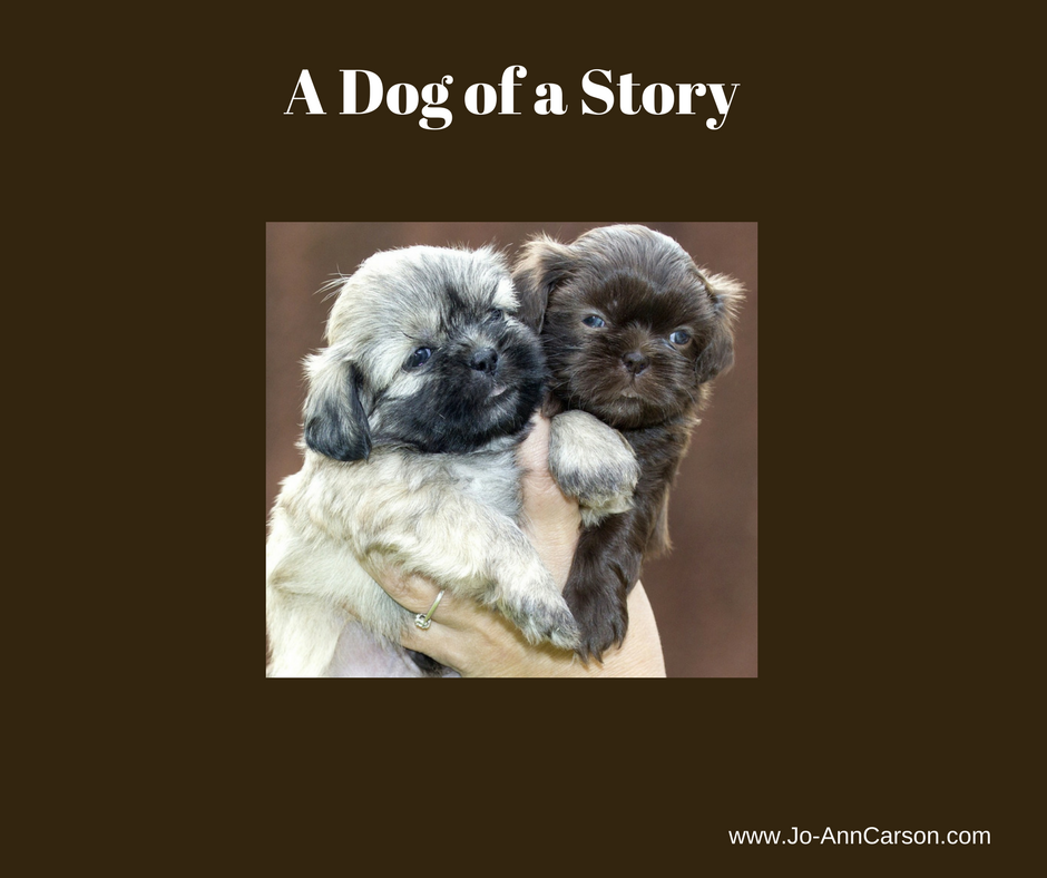 A Dog of a Story for Monday